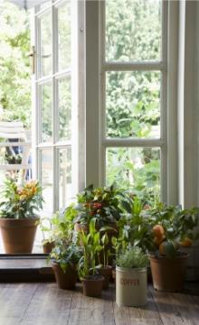 planten die de lucht zuiveren
